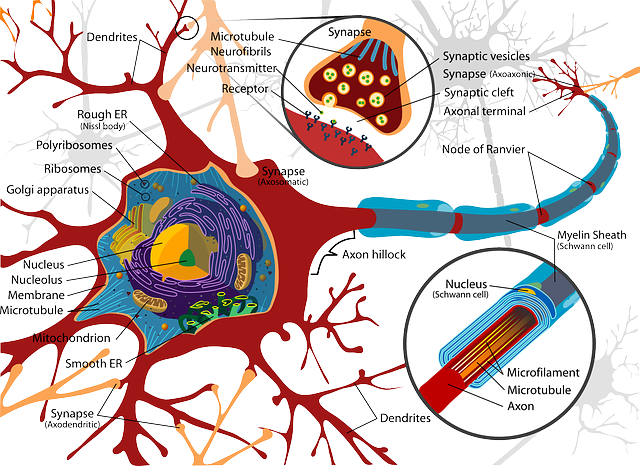 Neuro pathways